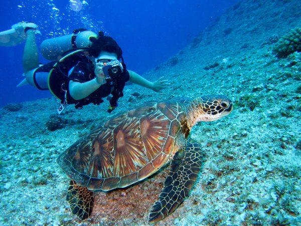 Waarom je moet gaan duiken in Egypte