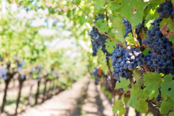 Dé wijnvakanties van het jaar